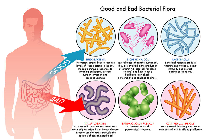 probiotics diagram
